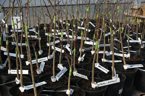 1.2-1000-neue-bäume