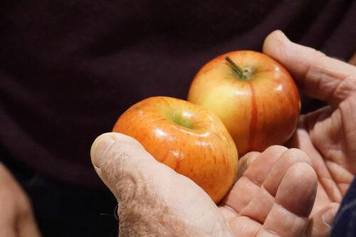 Apfelbestimmung-novaks-hände-Foto-I.Zeh